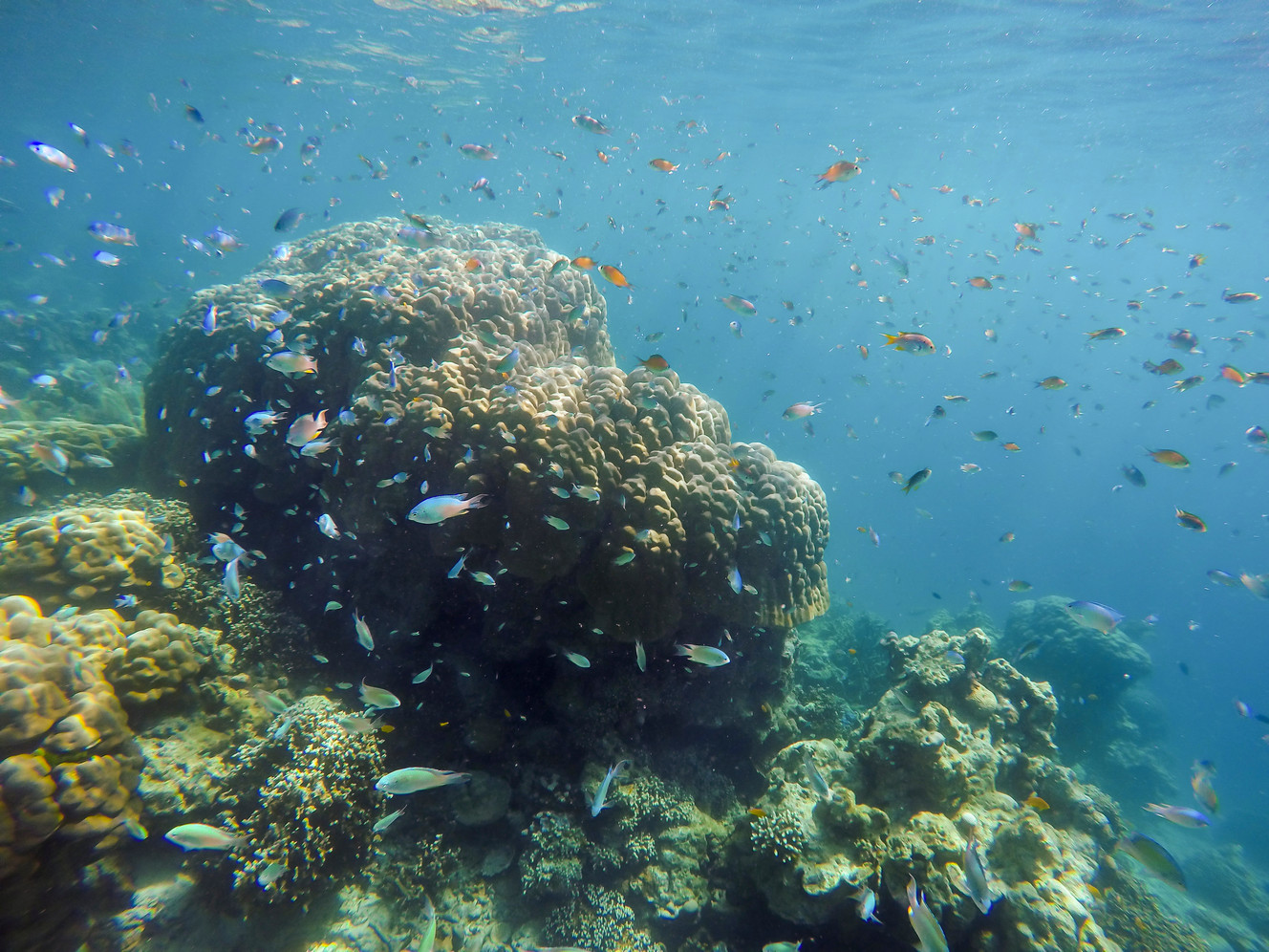 Canva - Under Water National Park Surin