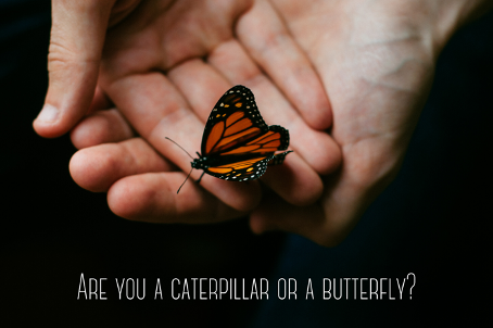 Are you a caterpillar or a butterfly?