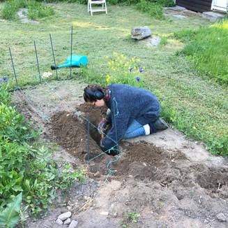 Planting Organic Potatoes
