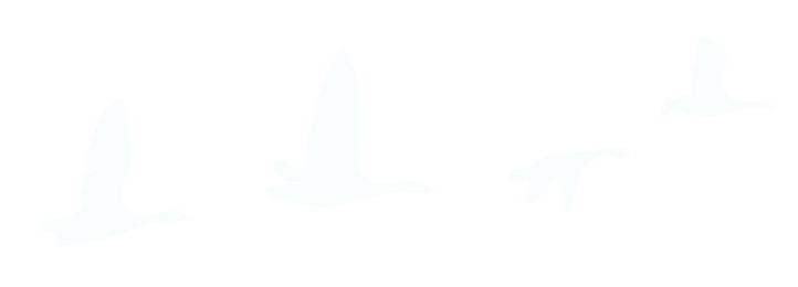 Geese Only-01 (1).png