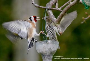 #SortieduWeekEnd - Apprendre à reconnaître les oiseaux des jardins ce samedi 28 janvier au Musée d&#
