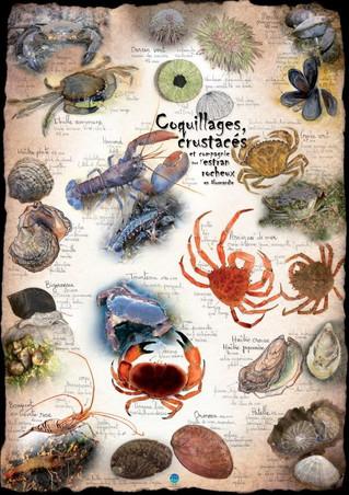 Coquillages, crustacés & Cie... Ils sont frais nos posters !