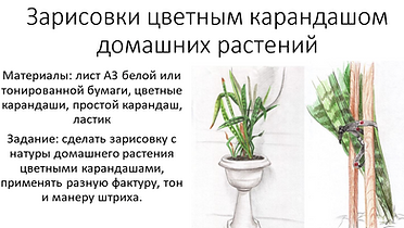 зарисовки дом.растений.PNG