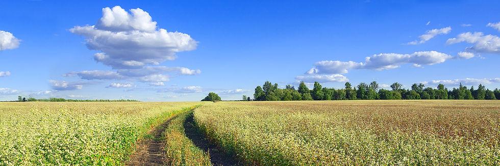 Alfalfa in the field on a grain farm
