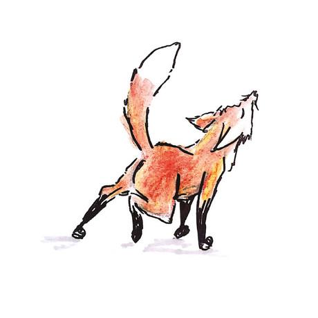 Stretching Fox