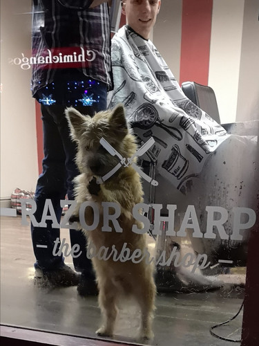 The cutest dog on Wheelock Street. Razor Sharp.