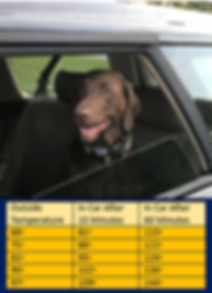 Roxy in car with Chart.PNG