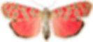 Butterfly-3-500x230.png