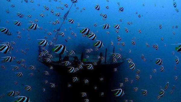 Pennant Butterflyfish Sea Tiger