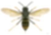 Traitement contre les guépes, Traitement anti punaises de lit à Marseille, (13) Bouches du Rhône, Antipesti Société de désinsectisation spécialisée dans le traitement des punaises de lit basée à Marseille. Traitement puce de lit Marseille, Anti cafard Marseille. Antipesti professionnel traitement anti punaise de lit, Marseille