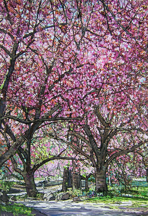 Walk Under Cherry Trees - LARGE