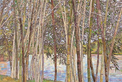Bamboo Near Lake - LARGE