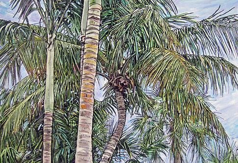 Windblown Palms - LARGE