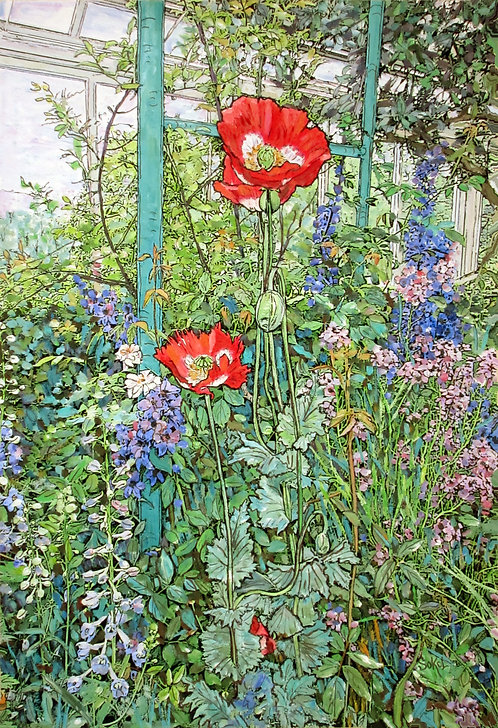 Red Poppies - LARGE