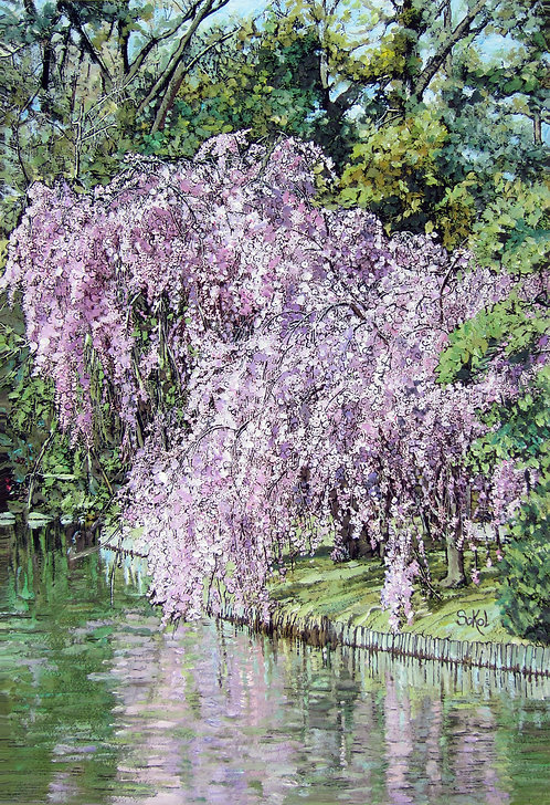 Weeping Cherry Tree - LARGE