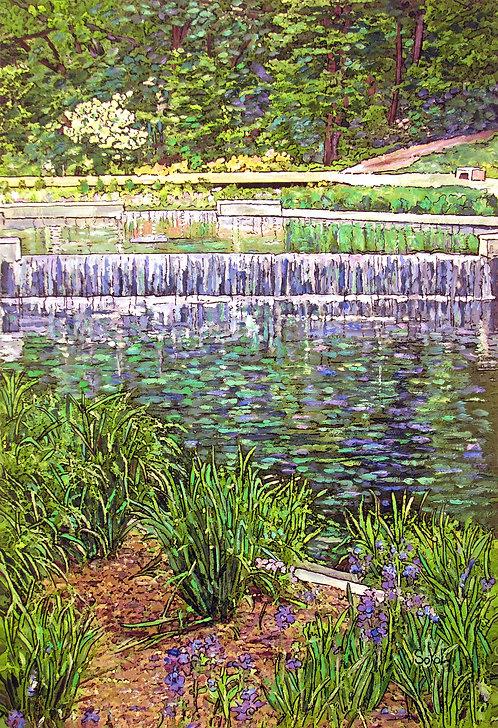 Native Plant Garden - SMALL