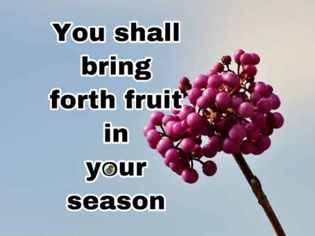 TODAY'S PRAYER: BE FRUITFUL AND MULTIPLY