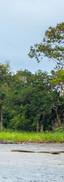 Santeram_Brazil_6_15.jpg