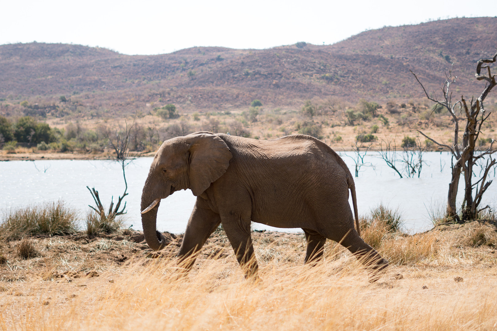 Pilanesburg National Park - Africa