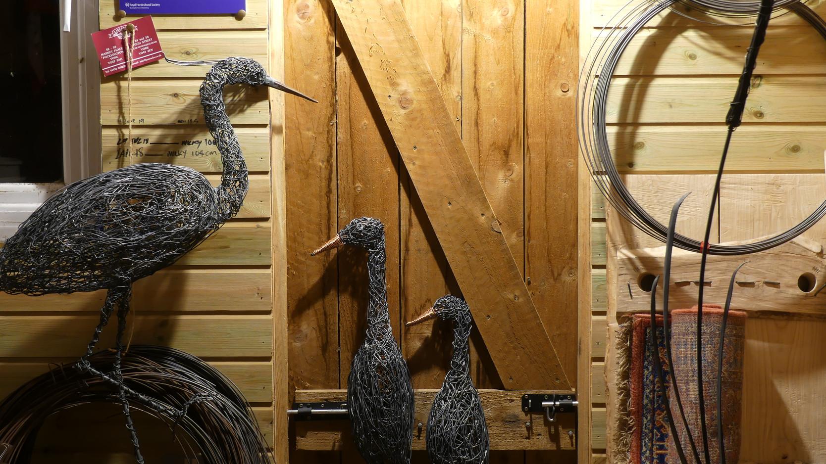 Runner Ducks and Heron
