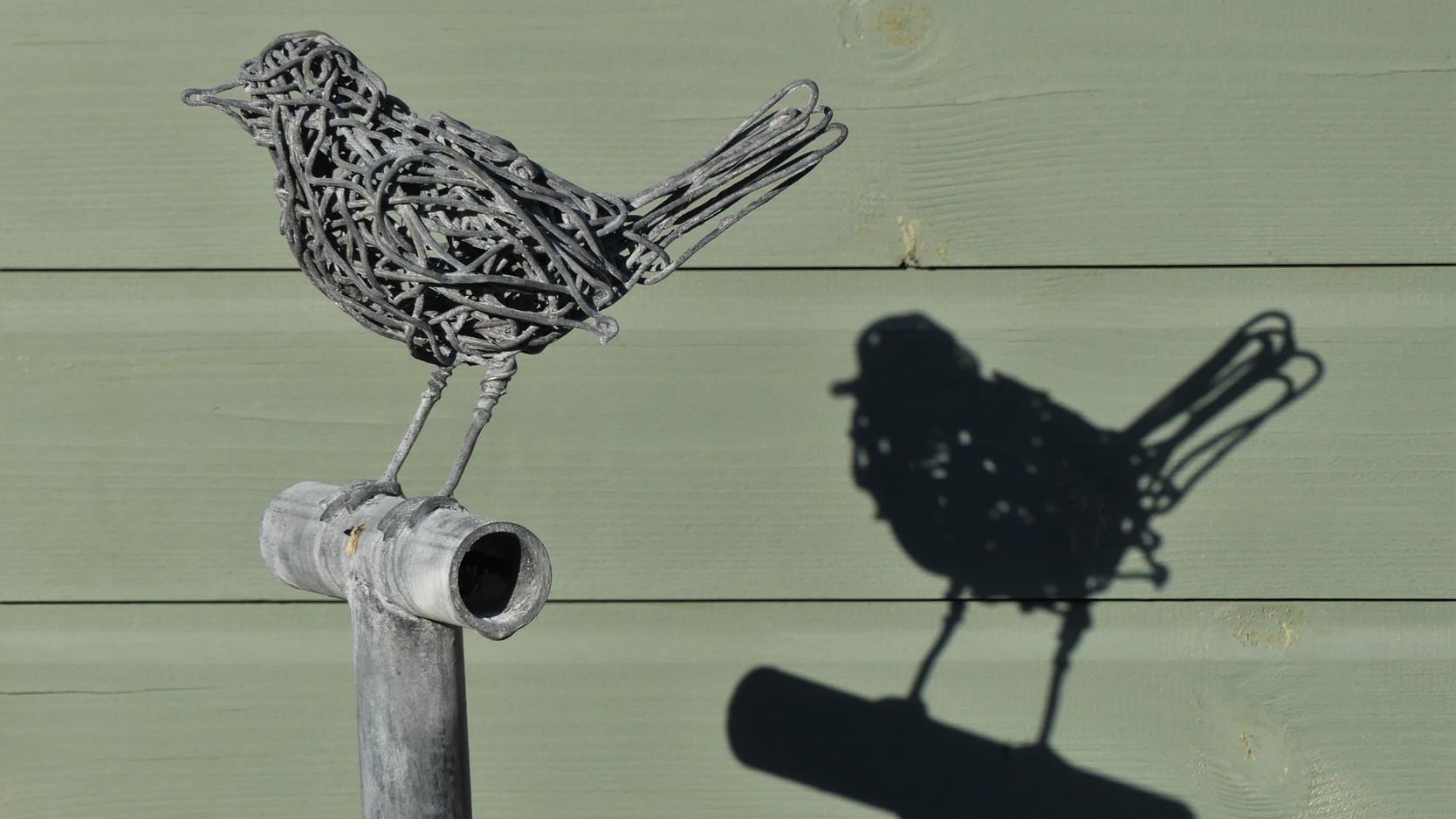 Blackbird and shadow.JPG