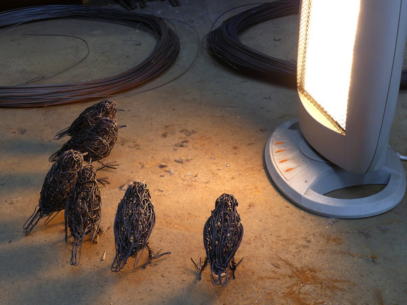 Robins for RHS Garden keeping warm befor