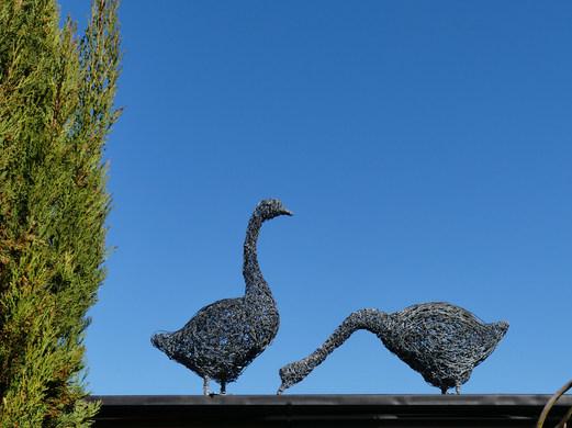 Geese on roof.JPG