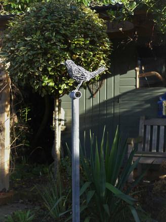 Blackbird on a garden fork.JPG