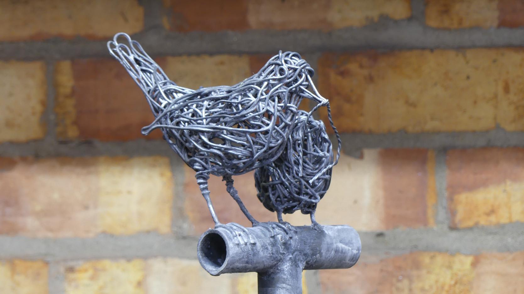 Blackbird feeding chick