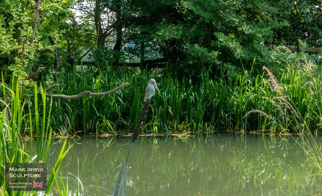 Kingfisher by Pocklington Canal