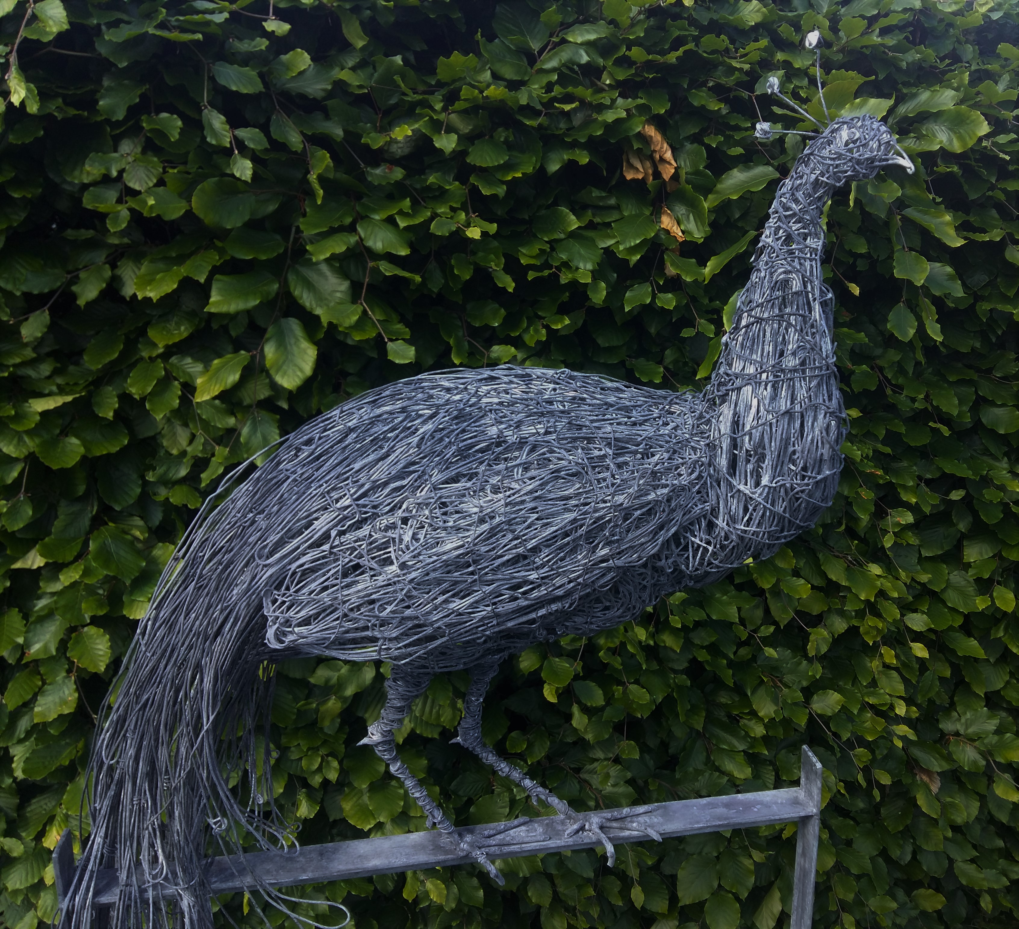 Wire peacock sculpture