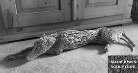 Greyhound lying in the sun mark irwin sc