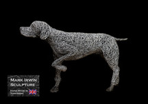 English Pointer right view