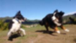 Todo para tu perro: Guarderia canina, adiestramiento, veterinario, venta de accesorios