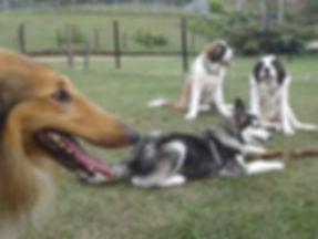 Guarderia Canina   El mejor lugar para tu Perro   Adiestramiento   Entrenamiento   Dias de Sol   Colegio   Venta de Accesorios