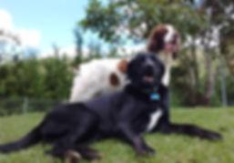 Guarderia Canina | Hotel Canino | Adiestramiento Canino | Entrenamiento | Venta de Accesorios | Baño | Veterinario