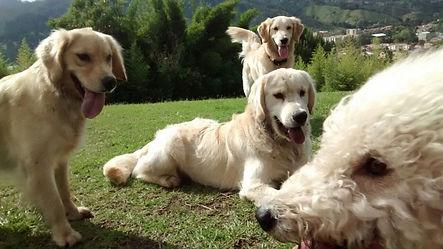 Guarderia Canina | El mejor lugar para tu Perro | Adiestramiento | Entrenamiento | Dias de Sol | Colegio | Venta de Accesorios
