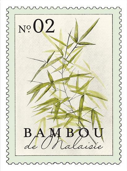 02. Bambou de Malaisie:                 hojas de bambú, flor de jazmín, lirio