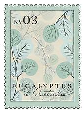 larome-eucalyptus.jpg