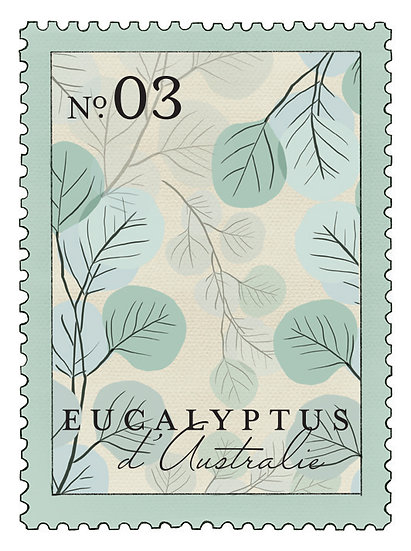 03. Eucalyptus d´Australie: eucalipto, menta, cedro verde