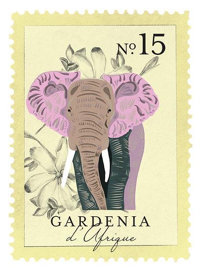 15.  Gardenia d´Afrique:            gardenia, orquídea, coco, maderas flotantes