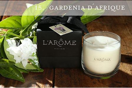 Gardenia d'Afrique du Sud