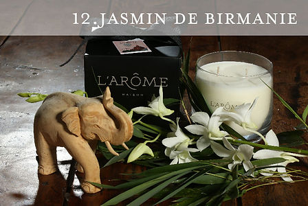 Jasmin de Birmanie