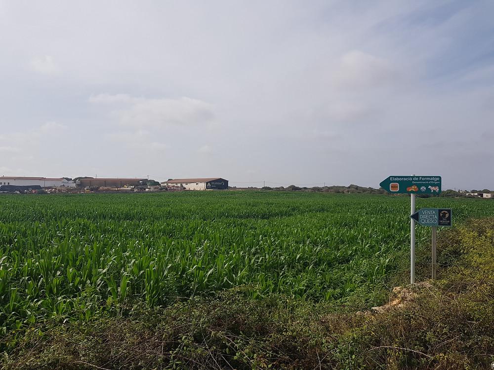 Granja de Son Caravinya - Quesos Artesanos Mahón Menorca