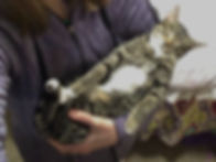 cat and exotic animals for pet therapy programs or senior citizens to pet