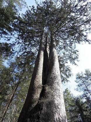 10-4-tree.jpg
