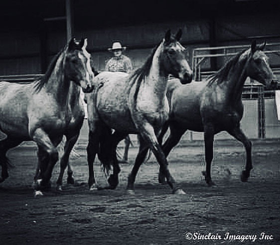 Heart of the Horse Colts