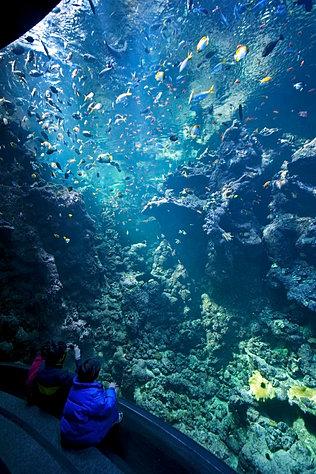 Mysite Steinhart Aquarium