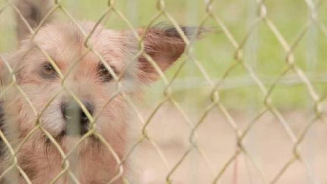 Pedigree e ZAP se unem para ajudar cães a acharem um lar