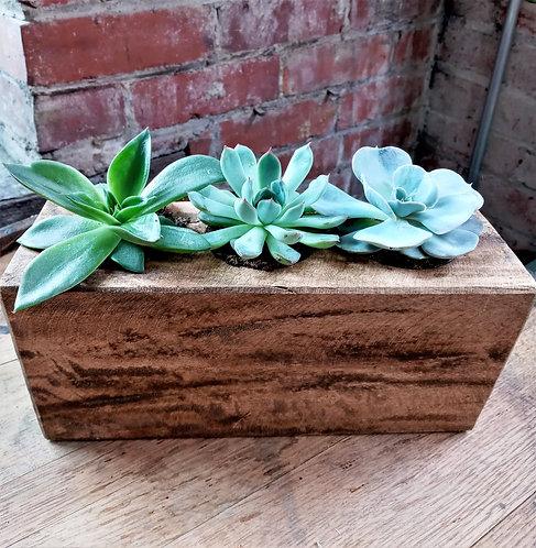 Triple Succulent Sugar Mold planter